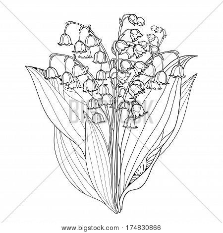 Lily Of The Valley Images Illustrations Vectors Free Bigstock