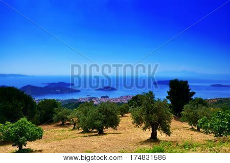 Olive trees view with seaside and ocean and sky on horizont Skiathos landscape Greece
