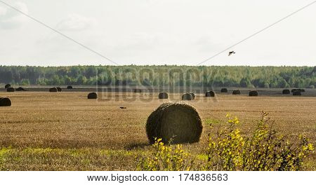 Hay stacks in the field. Autumn countryside landscape.