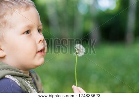 A Child Plays Outdoors With Dandelion