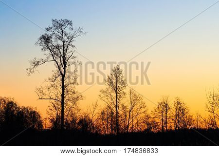Dark Black Silhouettes Of Trees Without Leaves On A Background Of Beautiful Vibrant Spring Sunset Sky. Natural Colors Of Morning Sky At Sunrise. Nature Forest Or Park Landscape In Evening At Sunset.