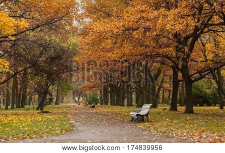 Empty bench on the alley side in autumn park. Catherinehof, Ekaterinhof park in Saint-Petersburg.