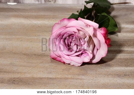 A pink Rose on a brown wooden background with copy sace.