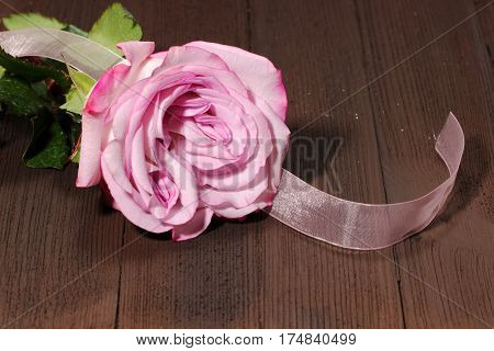 A pink Rose on a brown wooden background with a ribbon and copy sace.