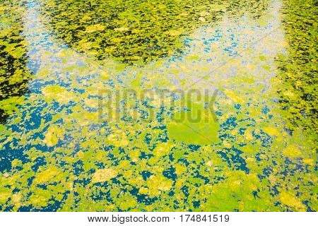 Suface Of Green Bog Swamp. Russian Nature In Autumn. Greenery, Green: Color Trend 2017
