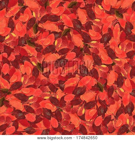 Seamless Background With Bright Multicolored Leaves Of Barberry