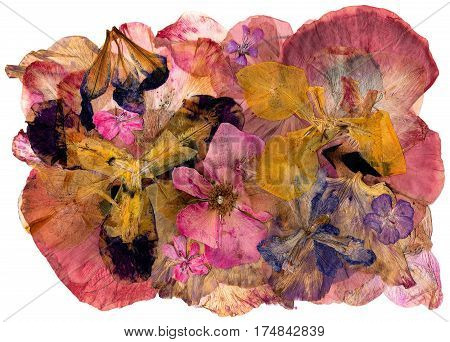 Motley Multicolored Applique Clearing Of Dried Pressed Flowers  Gladiolus