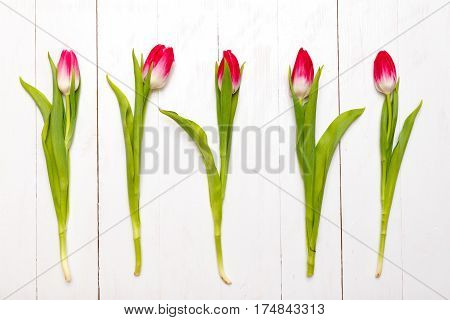 Row of tulips on wooden background. Holyday background. Top view
