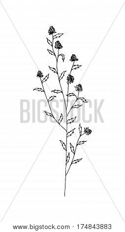 Outline of herb. Wild flower. Sketch style. Hand drawn weed. Vector illustration.