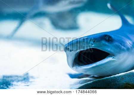 predatory sharks in the aquarium in search of food