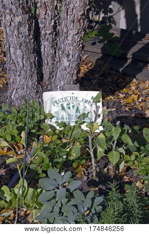 Close up of an edible fall garden with a sign saying it is pesticide free and is an are safe for children and others