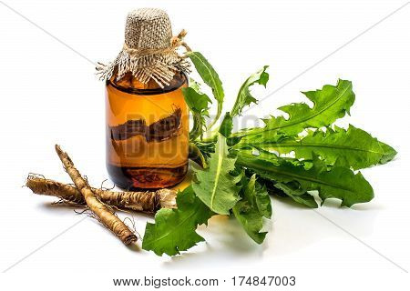 Medicinal plant dandelion (Taraxacum officinale). Dandelion leaves, roots and pharmaceutical bottle on a white background. It is used for herbal medicine and healthy food