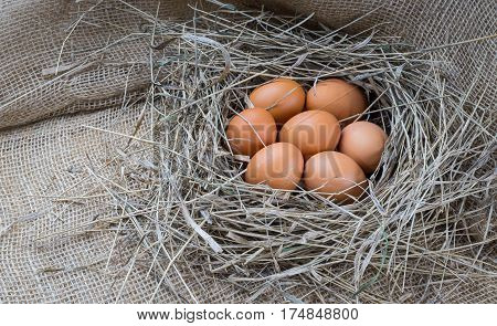 Brown eggs in hay nest. Chicken eggs in straw