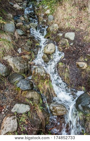 A stream at Lincoln Park in West Seattle rushes dow a hill.