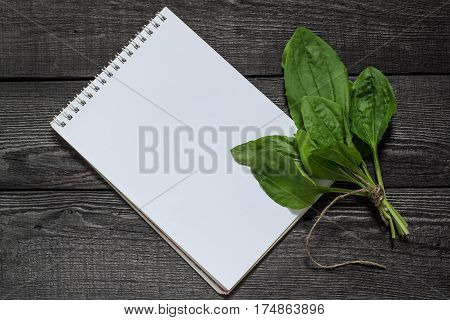 Common medicinal plant plantain (Plantago major) and notebook to write recipes and methods of application. Actively used in herbal medicine one of the oldest drugs