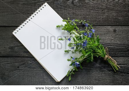 Medicinal plant Veronica Chamaedrys and notebook to write recipes and methods of application. Used in herbal medicine the indicator of soil acidity