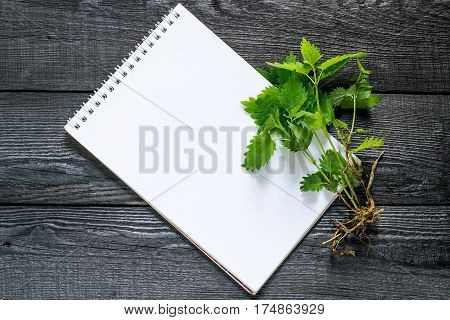 Medicinal plant nettle (Urtica dioica) and notebook to write recipes and methods of application. It is used in herbal medicine food preparation and production of fabrics