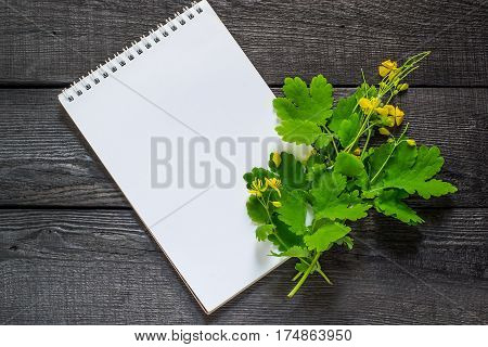 Medicinal plant celandine and notebook to write recipes and methods of application. Widely used in the treatment of skin diseases