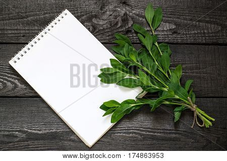 Medicinal plant Polygonum aviculare or common knotgrass (prostrate knotweed birdweed pigweed and lowgrass) and notebook to write recipes and methods of application. Used in herbal medicine cooking