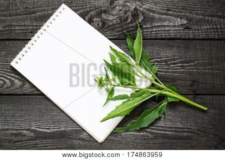 Medicinal plant Bunias orientalis (Turkish rocket hill mustard Turkish warty cabbage warty cabbage) and notebook to write recipes and methods of application. Used in herbal medicine cooking