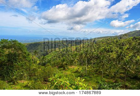 Landscape with palm tree and sea. Blue sky view with coco palm tree. Romantic image of palm tree leaves. Exotic landscape summer picture. Exotic island tourist banner template or card background