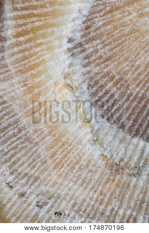 Close up on a marble stone that is scratch making a diagonal line pattern