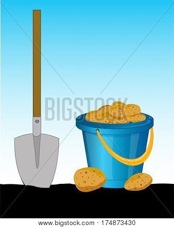 Full pail of the potatoes and shovel in ground