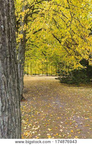 Autumn In Kungsparken, Malmo, Sweden