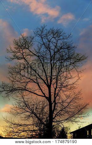 Big tree silhouette sunset sky background sunset sky tree