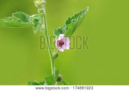 Wild flower close up shot