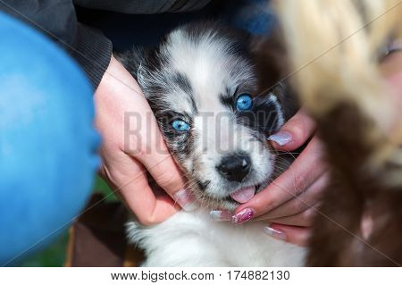 Woman Caress With A Cute Puppy