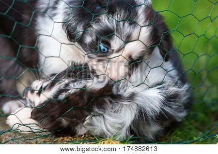 Two Puppies Fighting Behind A Fence