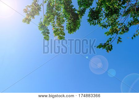 Beautiful tree and green leaf on sky background. nature. with sun ray flair.