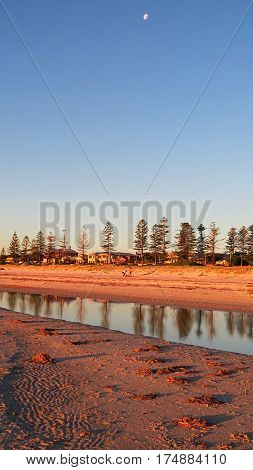 Autumn evening light on beach with Norfolk Pine tree reflection in water South Australia moon on sky