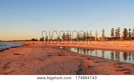 Autumn evening light on beach with Norfolk Pine tree reflection in water South Australia