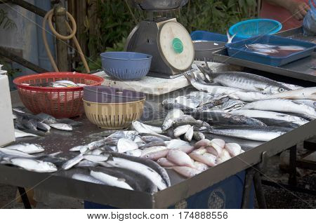 Many Fish For Sale With Weight Scale For Sale In Local Market