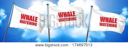 whale watching, 3D rendering, triple flags