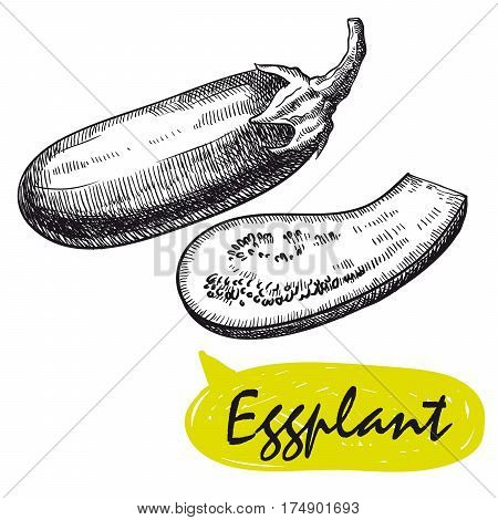 eggplant. set of hand drawn vector sketches on a white background