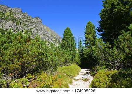Mountain landscape in Western Carpathians. Mlynicka Valley in Vysoke Tatry (High Tatras), Slovakia