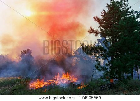 Forest Fire Wildfire burning tree in red and orange color at sunset.