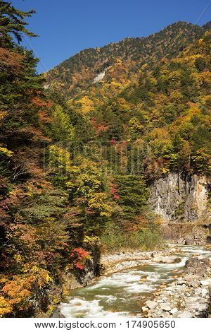 Autumn colorful forest and river under blue sky in Matsumoto, Nagano