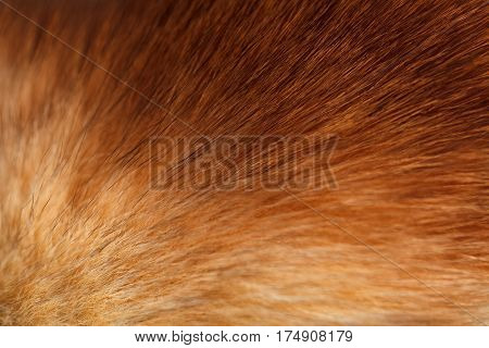 Fluffy ginger fur texture or background selective focus closeup