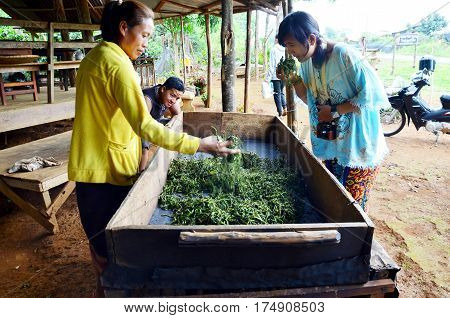 Thai people visit and learning with laotian old woman working process steaming dried or pan firing tea leaves at Bolaven Plateau on May 2 2015 in Paksong Champasak Laos