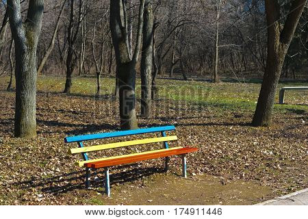 Vibrant colored red yellow and blue bench midday in spring time forest park