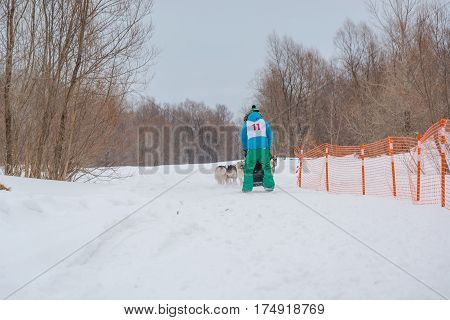 The Musher Disappearing Behind A Sled In A Draft Dog, Rush On Snow In The Winter.