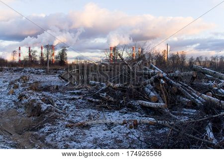 The felled trees against the background of the smoking pipes of the CHP. Ecological problems.