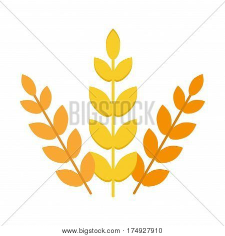 Ears of wheat agriculture food natural vector illustration. Agriculture food wheat healthy Nature grow gold rye wheat, autumn barley field harvest wheat