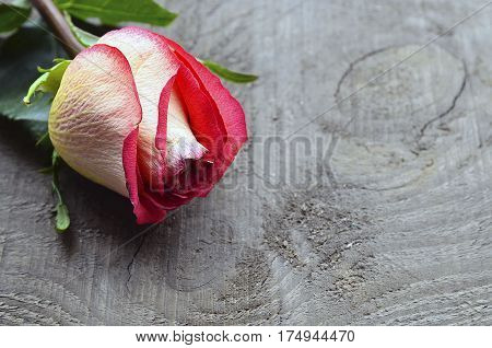 Rose on old wooden background with copy space. Mother's Day, Birthsday, Valentine's Day concept. Selective focus.