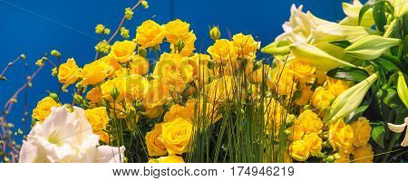 Flower wedding holiday decoration, beautiful yellow roses blooming bouquet on blue panorama