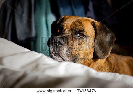 Cute Cheeky Dog Looking At Camera